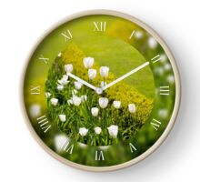White tulips grow in buxus Clock