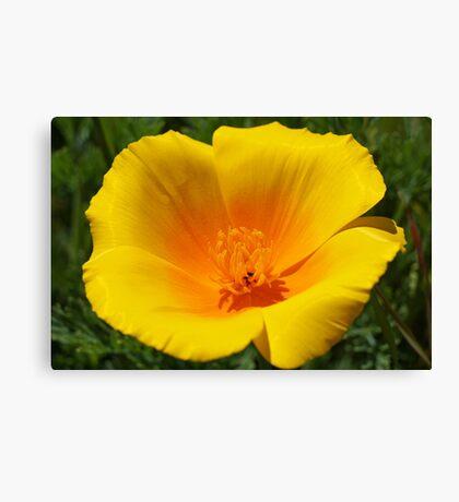 Big Poppy Flower Golden Orange Yellow Silky Canvas Print