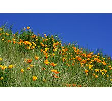 Poppy Flowers Meadow Blue Sky Green Hillside Art Photographic Print