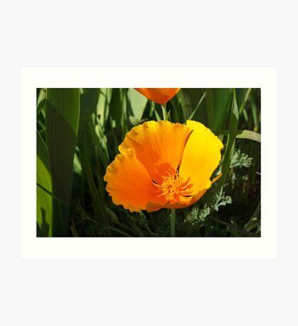 Poppy Flower Summer Floral Art Prints Gifts Art Print