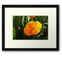 Poppy Flower Summer Floral Art Prints Gifts Framed Print