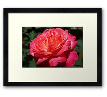 Big Red Pink Rose Flowers Art Prints Roses Framed Print