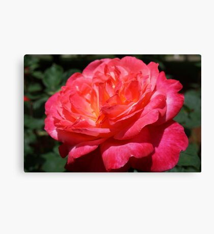 Big Red Pink Rose Flowers Art Prints Roses Canvas Print