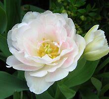 Soft Tulip Variation by Kathleen Brant