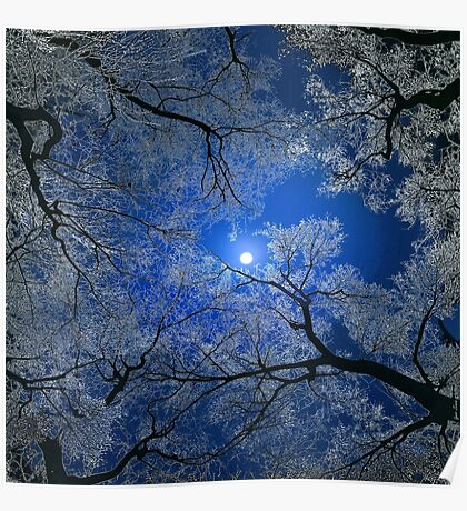 Moonlight Trees Poster