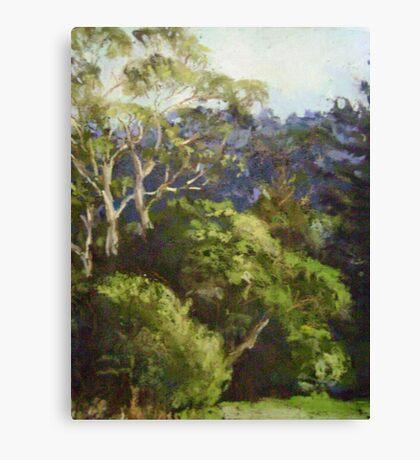 Leura afternoon Canvas Print