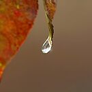 Last Drop by Debbie Oppermann