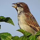 Profile of a Sparrow by lorilee