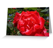 Big Red Rose Flower Art Print gifts Roses Garden Greeting Card