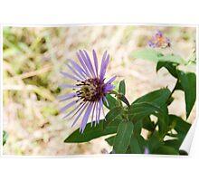 Sparkle Flower Poster