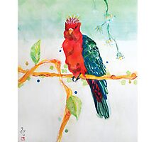 The Parrot King Photographic Print