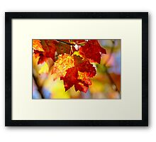 Autumn's Maple II Framed Print