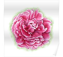 Pink and White Watercolor Peony Poster