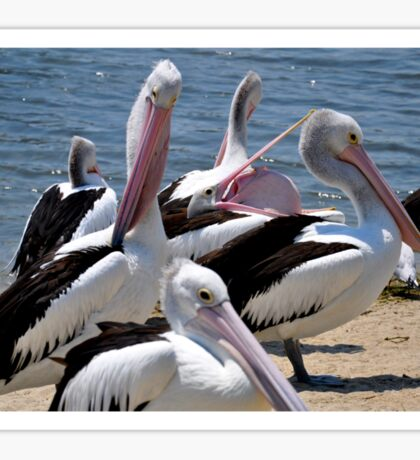 Disturbing Pelican Sticker