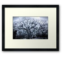 Touch of Frost Framed Print