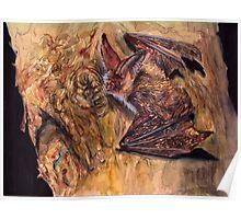 Brown Long-Eared Bat Poster
