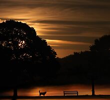 Dawn Dogs by kelvinLemur