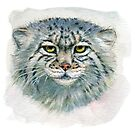 Manul Pallas's cat 862 by schukinart
