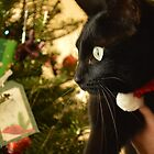Christmas Cat by Jade Damboise Rail