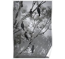 Cormorants on a Foggy Day Poster