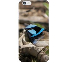 Male Variagated blue wren iPhone Case/Skin
