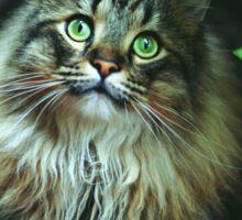 Cat in the garden Sticker
