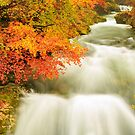 The Soteska Vintgar gorge in Autumn by Ian Middleton