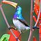 Colourful Birds of Southern Africa