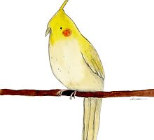 Yellow Cockatiel by Sophie Corrigan