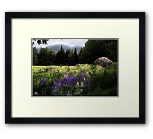 Lupine in the Shadow of Cannon Framed Print