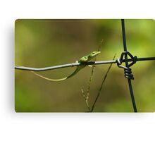 Green Anole on Fence Canvas Print