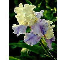 Just Call Me Iris.... Photographic Print