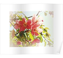Afterglow - Crab Apple Blossoms In Spring Poster