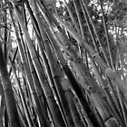 The Bamboo Forest B&W  by John  Kapusta