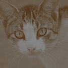 Kitty v.3 by tropicalsamuelv