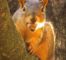 One More Nut . . . .  by lorilee
