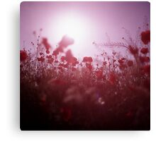 Red wild flowers poppies on hot summer day Hasselblad square medium format film analogue photography Canvas Print