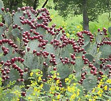 Prickly Pear With Wildflowers by Navigator