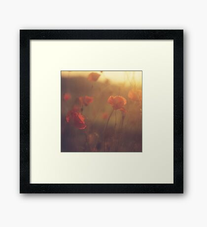 Red wild flowers poppies on hot summer day in brown warm tones Hasselblad square medium format film analogue photo Framed Print