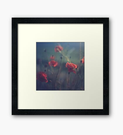 Red wild flowers poppies on hot summer day in blue tones Hasselblad square medium format film analogue photo Framed Print