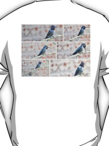 COLLAGE OF BLACK CHINNED HUMMINGBIRD T-Shirt