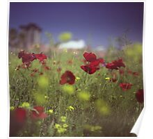 Red wild flowers poppies on hot summer day in urban city wasteland Hasselblad square medium format film analogue photo Poster