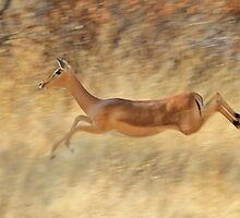 Impala - Blur of Speed and Flight by LivingWild