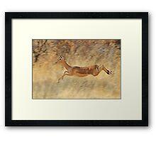 Impala - Blur of Speed and Flight Framed Print
