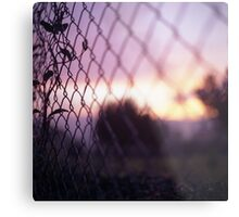 Wire fence and foliage on summer evening  in Spain square medium format film analogue photo Metal Print