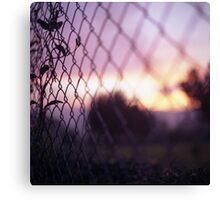 Wire fence and foliage on summer evening  in Spain square medium format film analogue photo Canvas Print