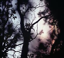 Tree branches on summer evening  in Spain square medium format film analogue photographer by edwardolive