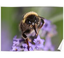 Bee Close-up Poster