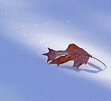 Oak Leaf On Snow Winter Day by CelticCatArt