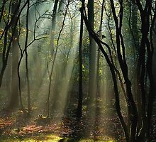 Rays of light by hanspeters